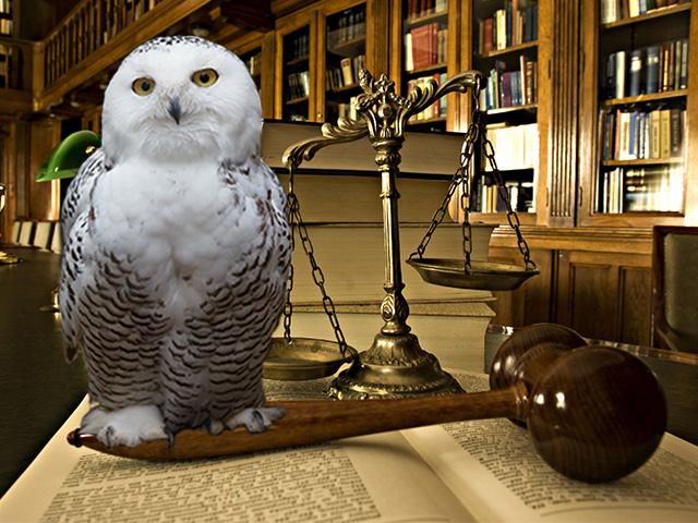 Hema Õigusbüroo - Õigusvaldkonnad